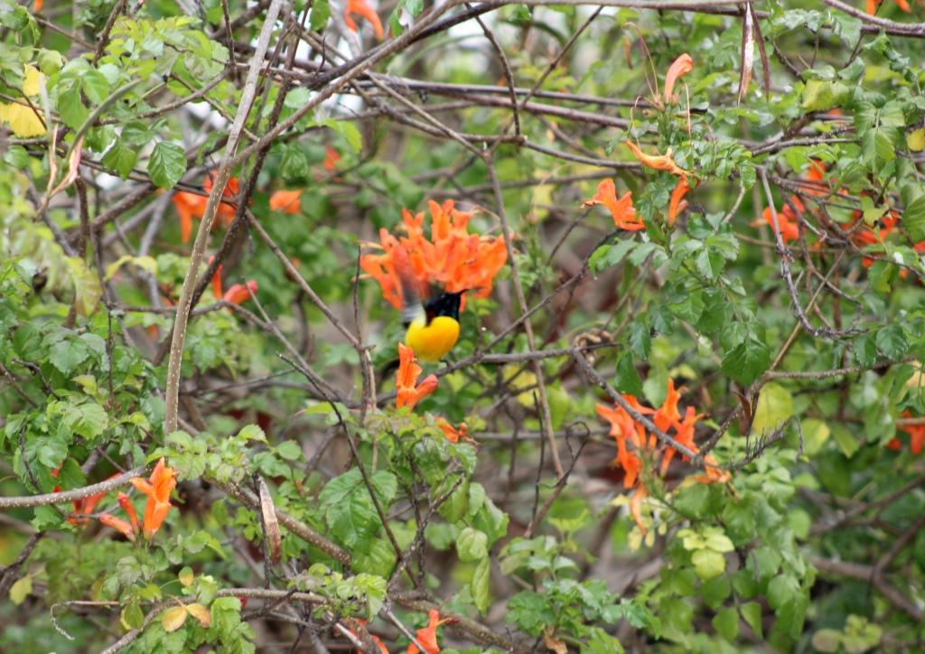 Birds Watching in Jim Corbett's Solluna Resort