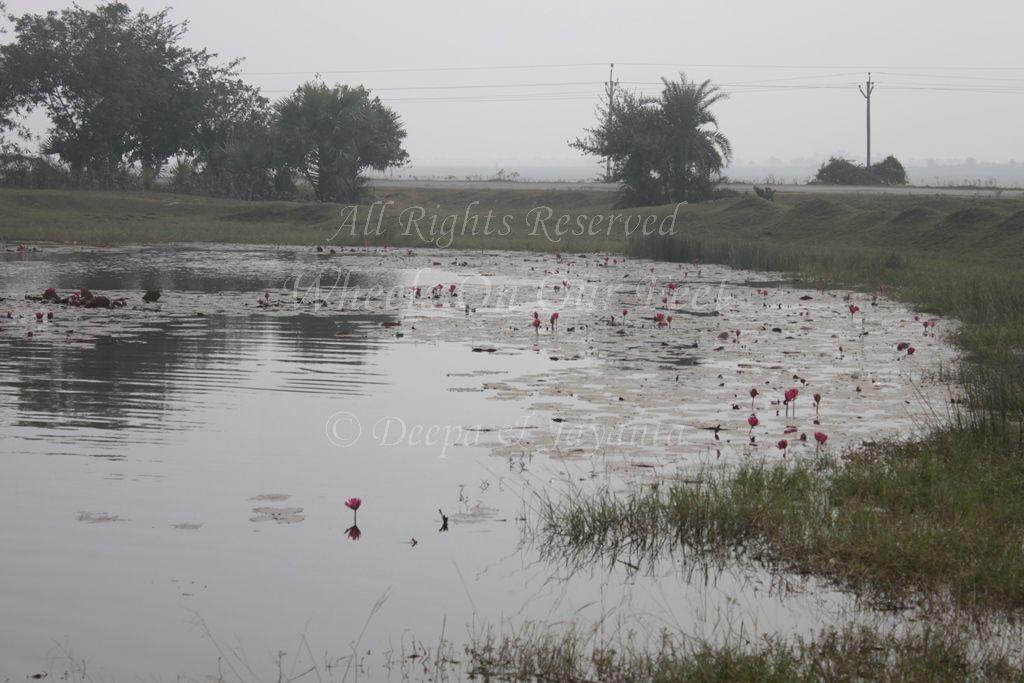 Village In Shantiniketan (29)