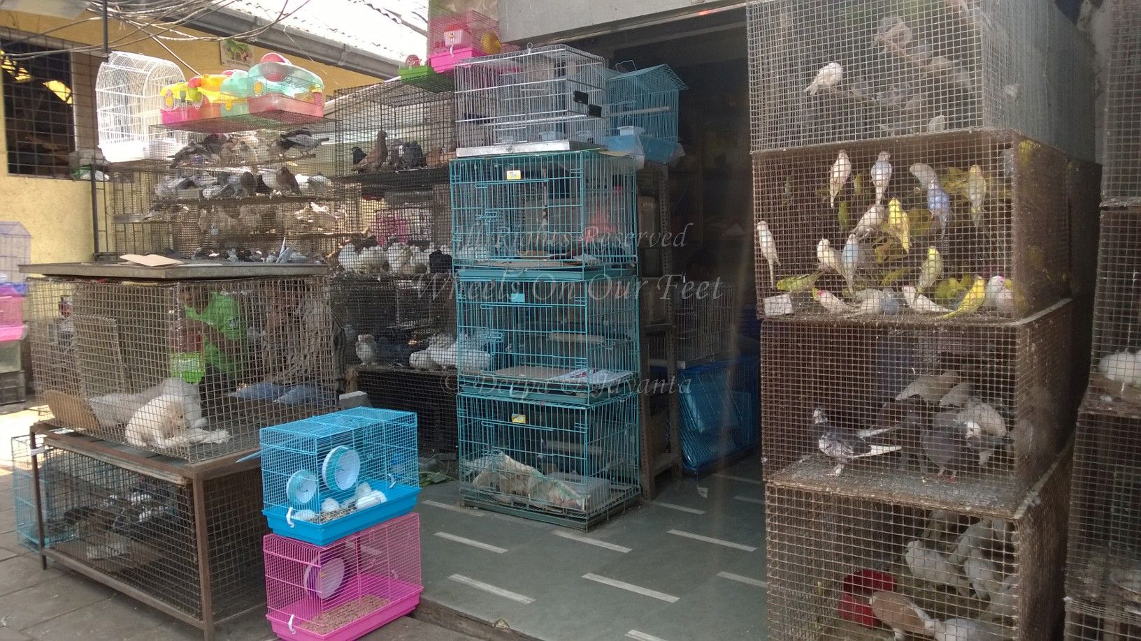 Pet Shops In Mumbai S Crawford Market 1 Wheels On Our Feet
