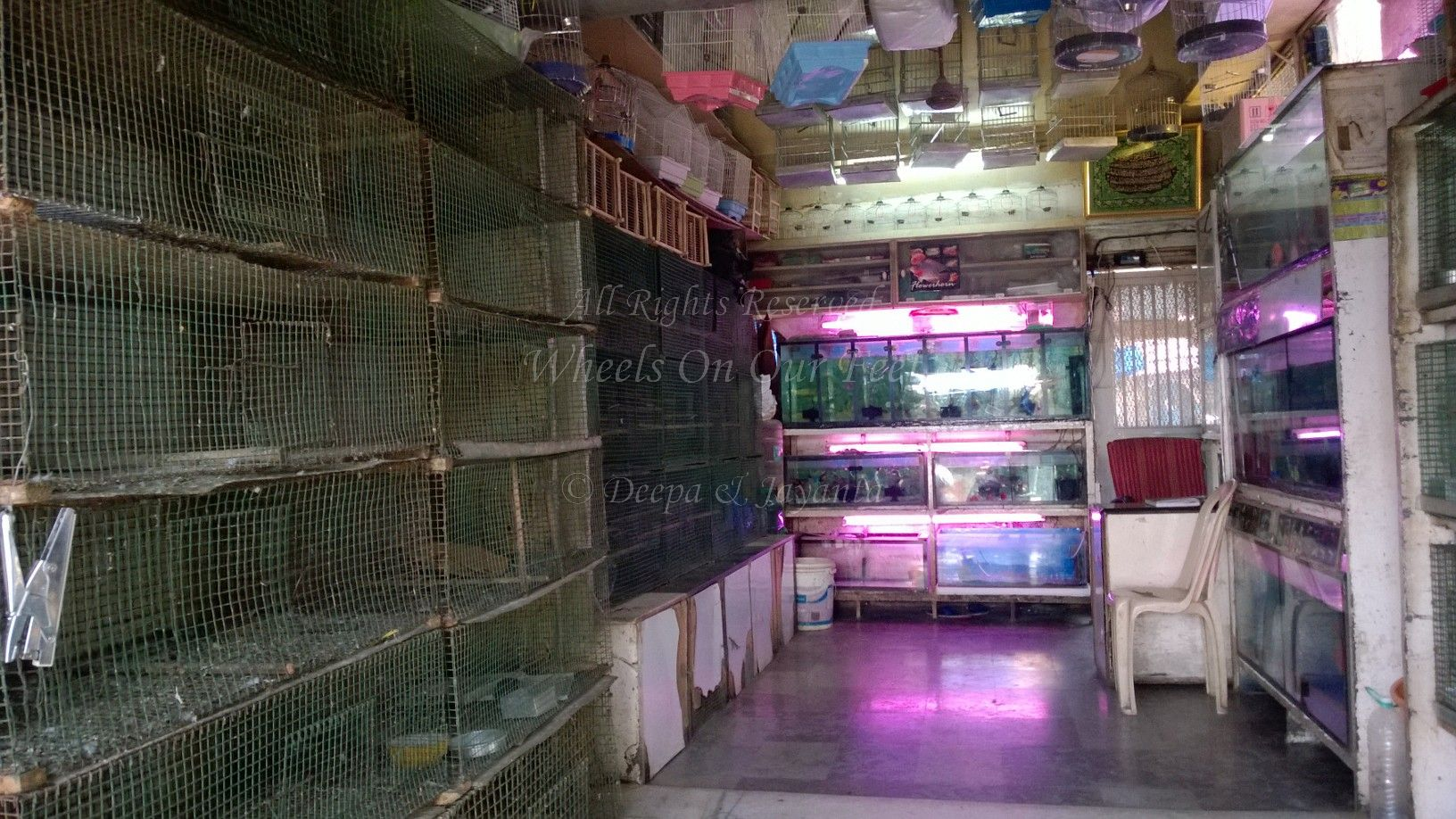 Pet Shops in Mumbai's Crawford Market (4) – Wheels On Our Feet