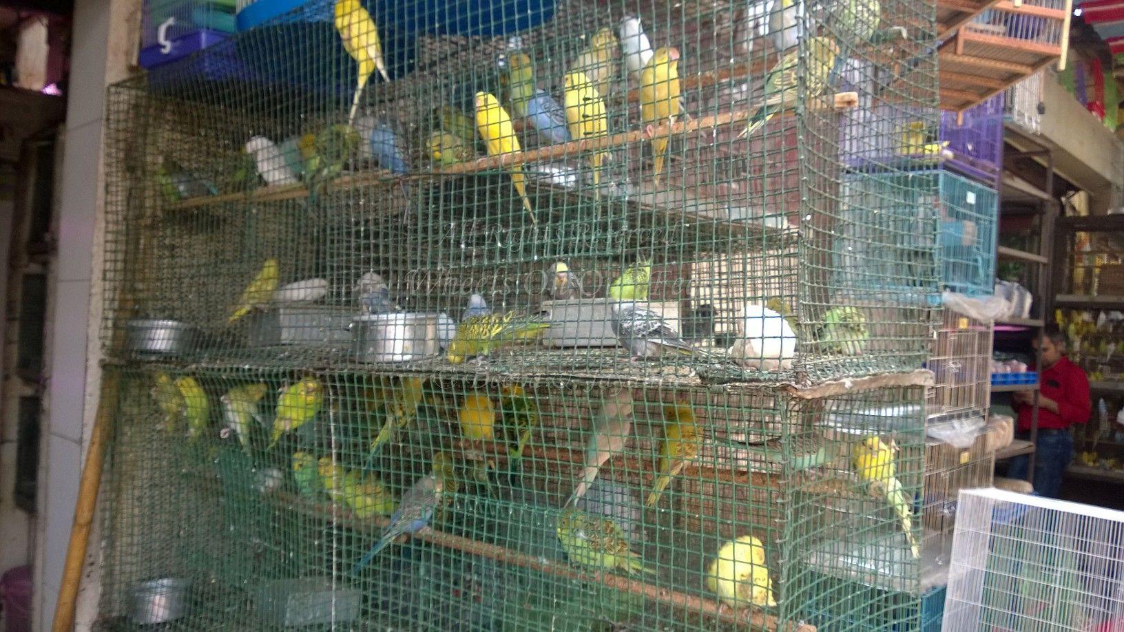 Fish aquarium market in delhi - Are