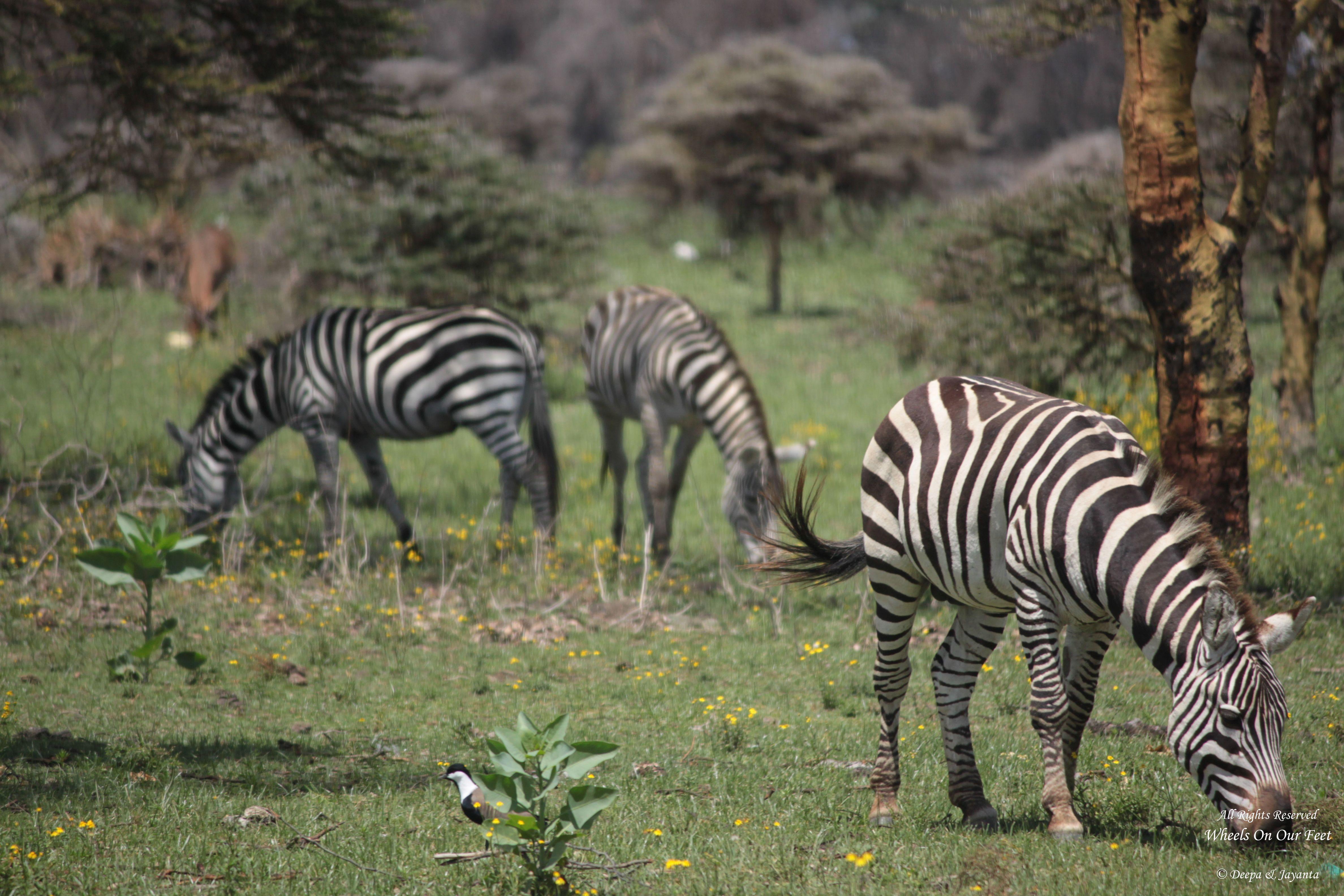 A Walk In The Woods of Lake Naivasha, Kenya