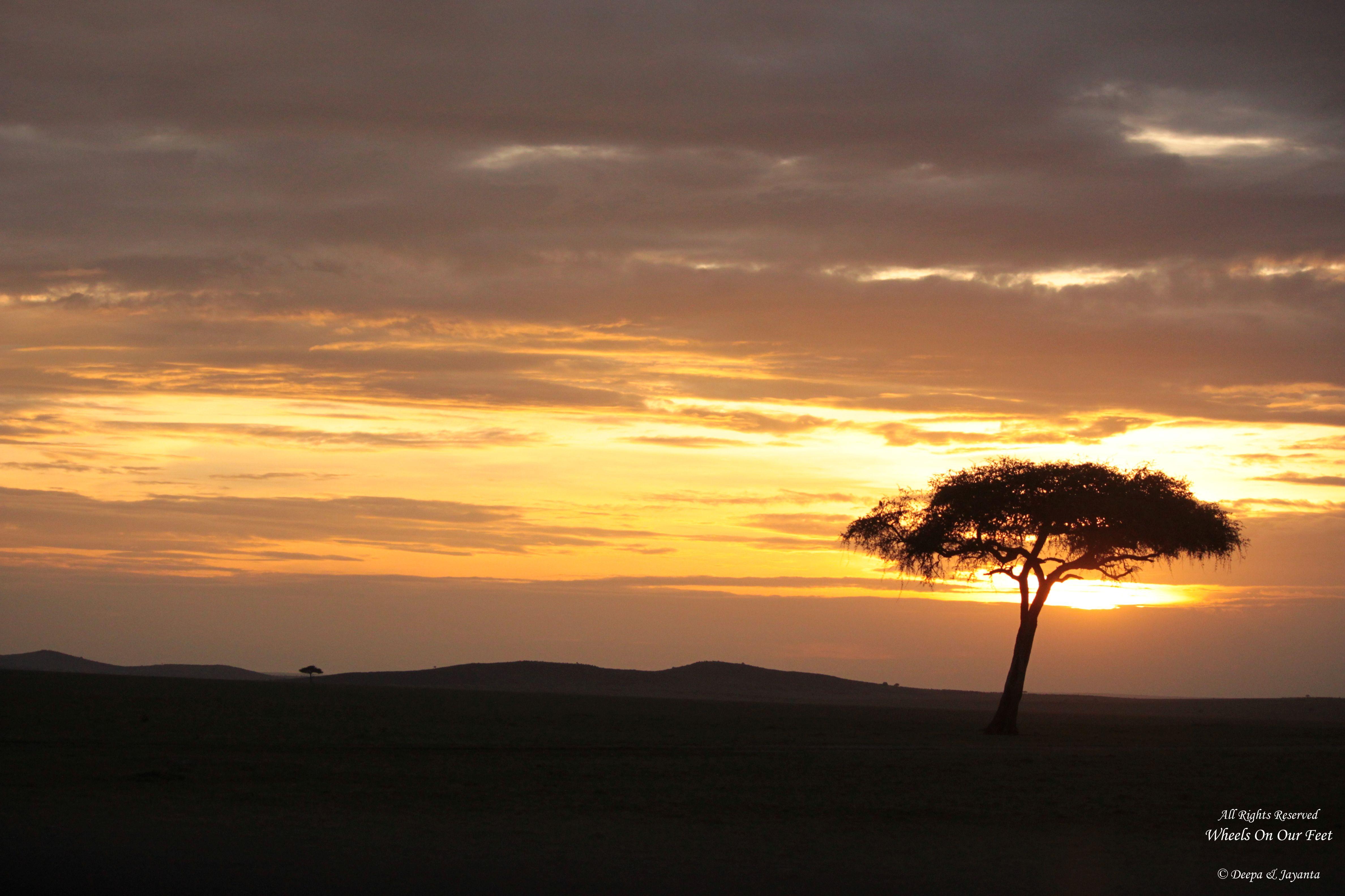 Maasai Mara Sunset Safari/Game Drive