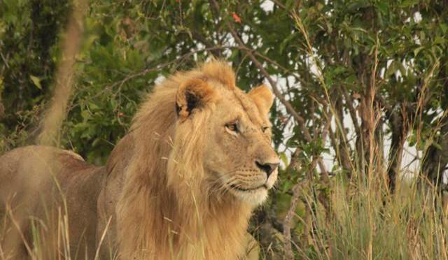 Full-day Safari in Maasai Mara, Kenya