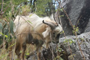 Drive to Munsiyari, Uttarakhand