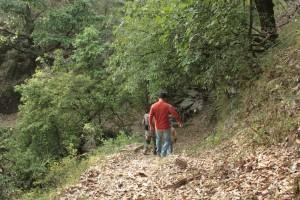 Sight-seeing in Binsar, Uttarakhand