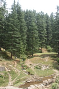 Sight-Seeing in Binsar, Uttarakhand