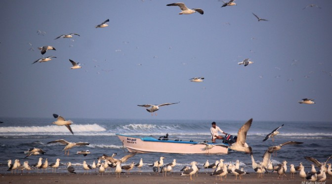 Why You Will Fall In Love With The Ganapatiphule Beach