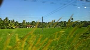Drive from Nigambo to Habarana in Sri Lanka