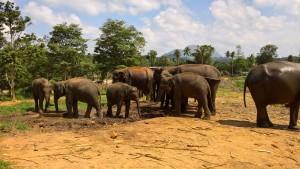 Pinnawala Elephant Center in Sri Lanka