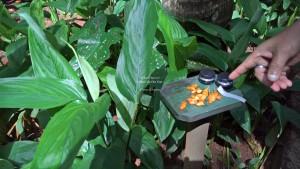 Spice Garden Tour in Sri Lanka