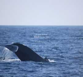 Whale Watching in Mirissa in Sri Lanka