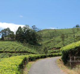 Things to do in Munnar, Kerala