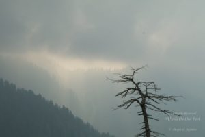 Hills-hopping in Himachal